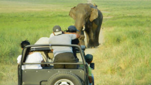 Online Corbett Jeep Safari Booking