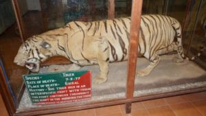 Stuffed Tiger