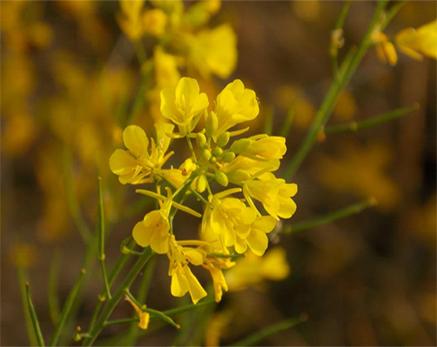 Corbett Park Flora