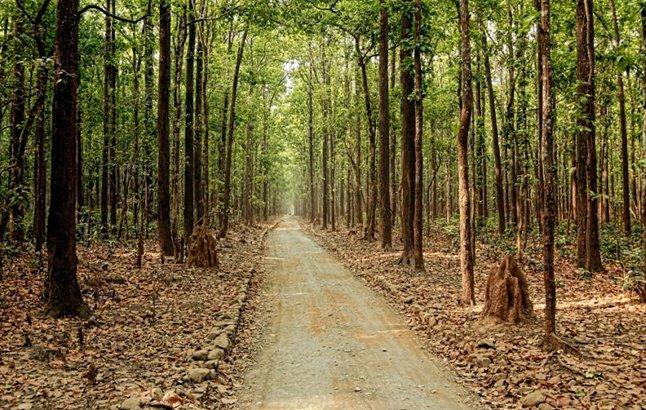Sitabani Forest