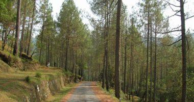 Binsar Ranikhet Tour