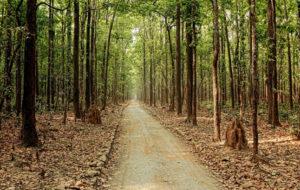 Sitabani Forest Zone