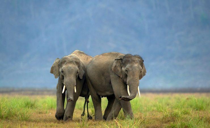 Elephants in Corbett National Park