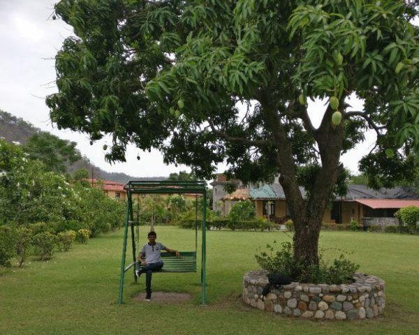 Corbett Mango Bloom Garden